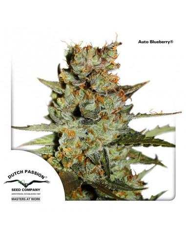 AutoBlueberry