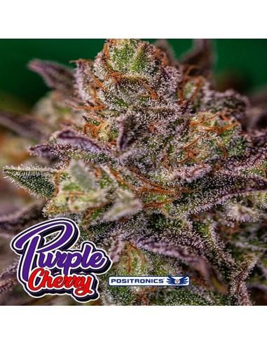Purple Cherry