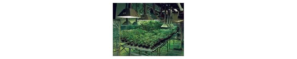 cultivo interior