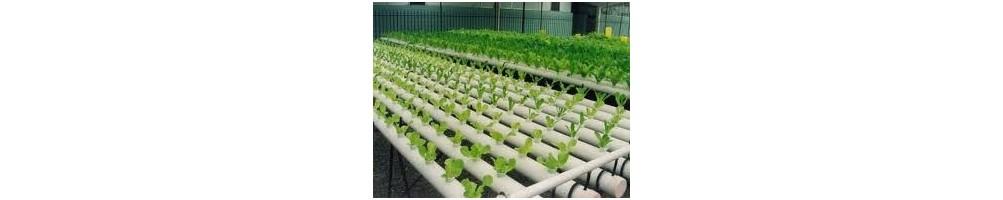 cultivo en hidro-aeroponia