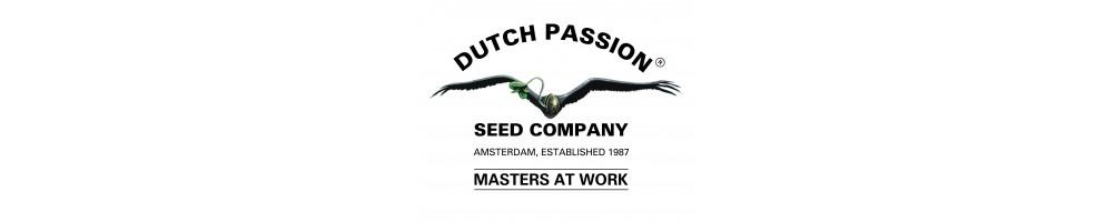 Dutch Passion Autofloreciente.